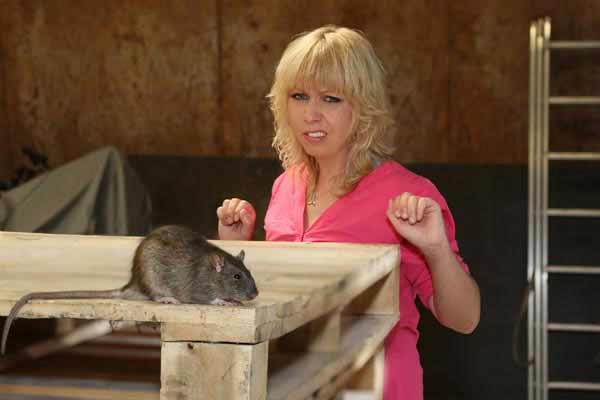 Ratte im Haus
